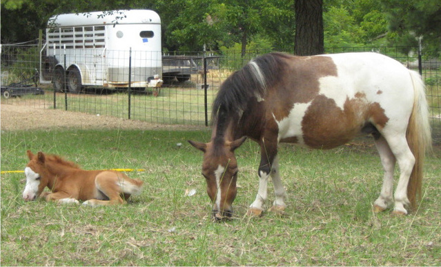 LMT with foal born 7/14/11